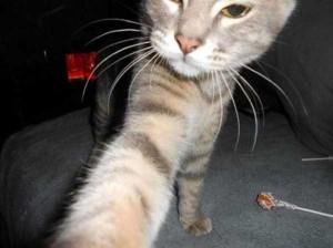 Charming Cats Taking Selfies (38 photos) 25
