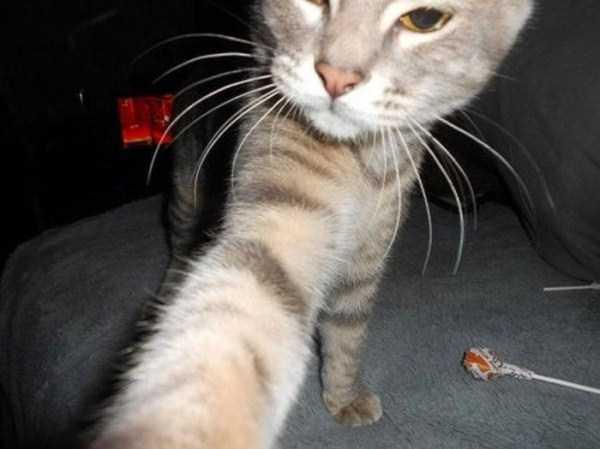 cats-selfies (25)