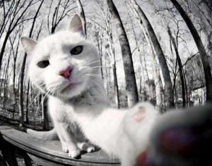Charming Cats Taking Selfies (38 photos) 28