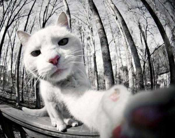 cats-selfies (28)