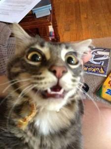Charming Cats Taking Selfies (38 photos) 29