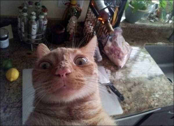 cats-selfies (30)