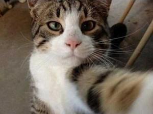 Charming Cats Taking Selfies (38 photos) 33