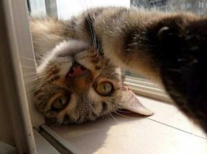 Charming Cats Taking Selfies (38 photos) 35