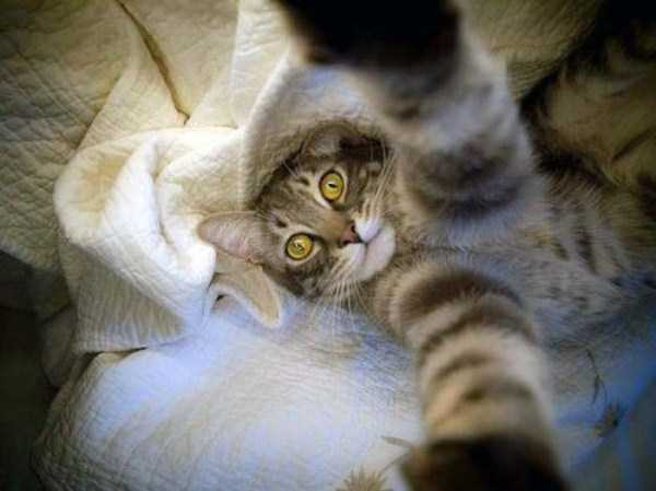 cats-selfies (36)