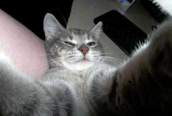 cats-selfies (4)