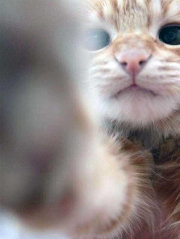 cats-selfies (5)