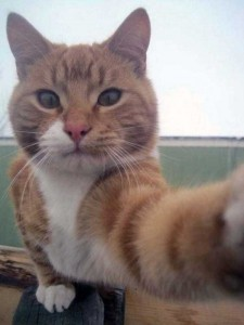 Charming Cats Taking Selfies (38 photos) 9