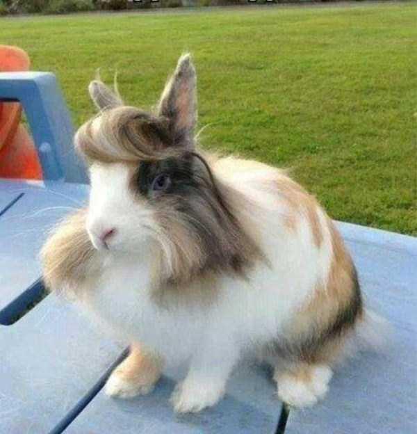 cute-cool-animals-(5)