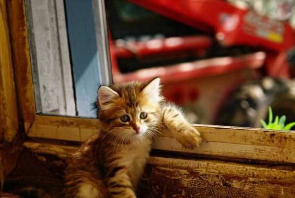 cute-cool-animals-(9)