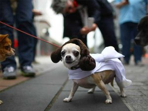 Ridiculous Yet Hilarious Halloween Pet Costumes (18 photos) 10