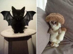 Ridiculous Yet Hilarious Halloween Pet Costumes (18 photos) 11