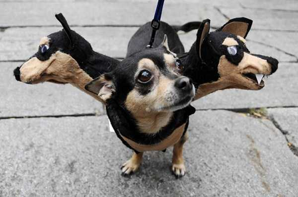 Ridiculous Yet Hilarious Halloween Pet Costumes (18 photos) 12