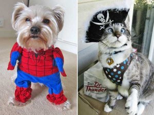 Ridiculous Yet Hilarious Halloween Pet Costumes (18 photos) 13