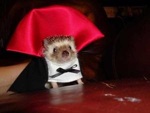 Ridiculous Yet Hilarious Halloween Pet Costumes (18 photos) 14