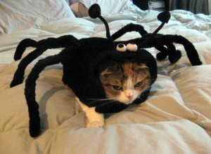 Ridiculous Yet Hilarious Halloween Pet Costumes (18 photos) 15