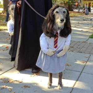 Ridiculous Yet Hilarious Halloween Pet Costumes (18 photos) 18