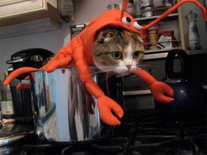 Ridiculous Yet Hilarious Halloween Pet Costumes (18 photos) 3