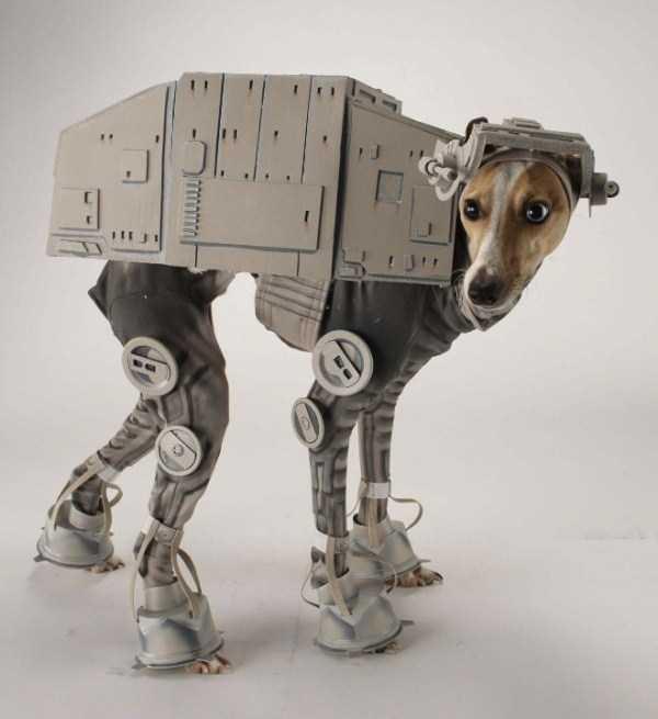 diy-halloween-pet-costumes (4)