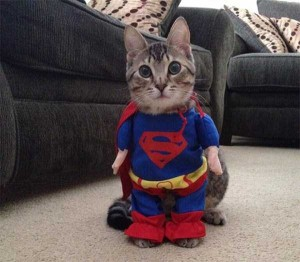 Ridiculous Yet Hilarious Halloween Pet Costumes (18 photos) 6