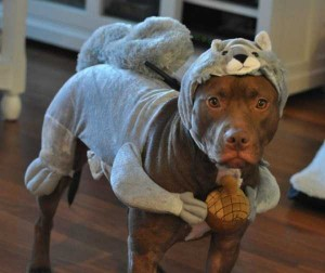 Ridiculous Yet Hilarious Halloween Pet Costumes (18 photos) 7