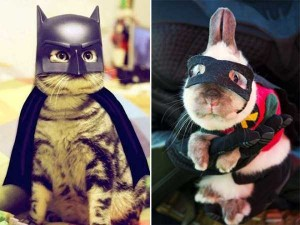 Ridiculous Yet Hilarious Halloween Pet Costumes (18 photos) 9