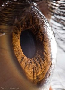Human Eye Under a Microscope (21 photos) 1