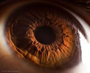 Human Eye Under a Microscope (21 photos) 10
