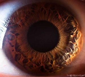 Human Eye Under a Microscope (21 photos) 11