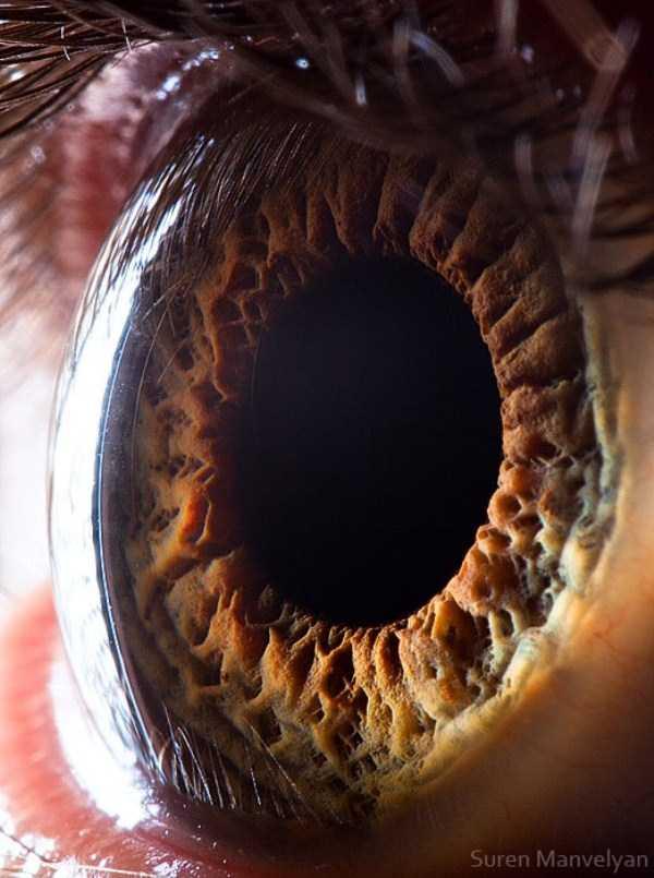 Human Eye Under a Microscope 21 photos KLYKERCOM