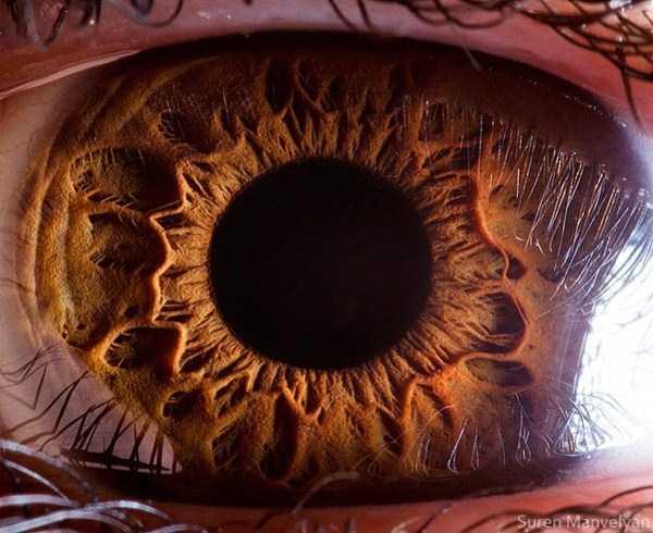 extreme-close-up-of-human-eye-macro-suren-manvelyan-14