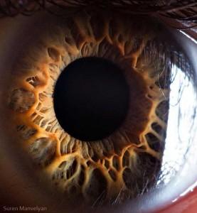 Human Eye Under a Microscope (21 photos) 15