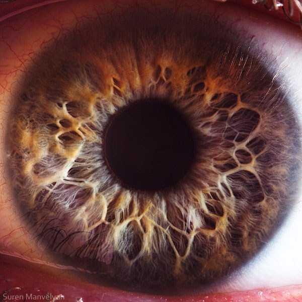 Human Eye Under A Microscope (21 Photos)