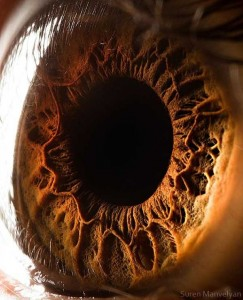 Human Eye Under a Microscope (21 photos) 17