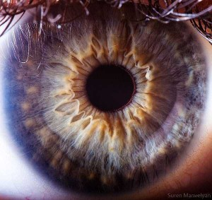 Human Eye Under a Microscope (21 photos) 18