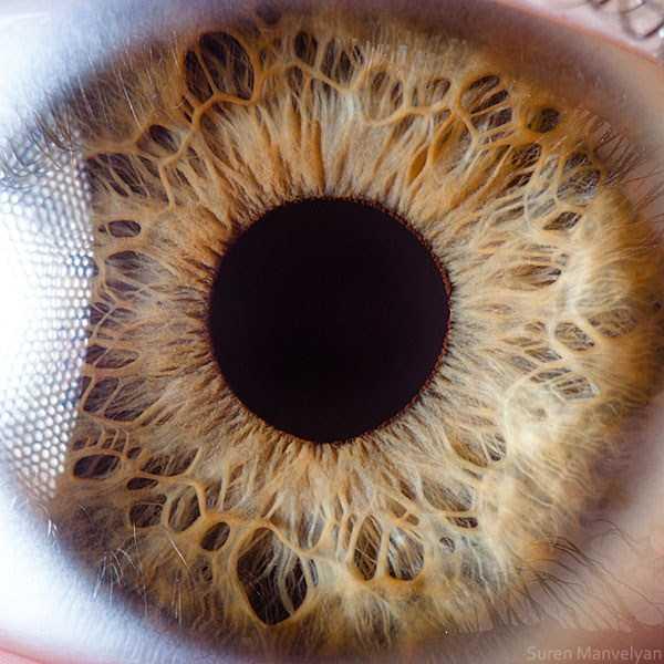 extreme-close-up-of-human-eye-macro-suren-manvelyan-19