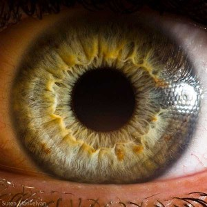 Human Eye Under a Microscope (21 photos) 2