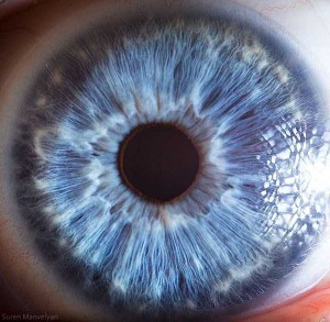 Human Eye Under a Microscope (21 photos) 20