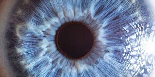 Human Eye Under a Microscope (21 photos) 22