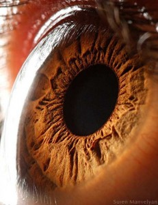 Human Eye Under a Microscope (21 photos) 5