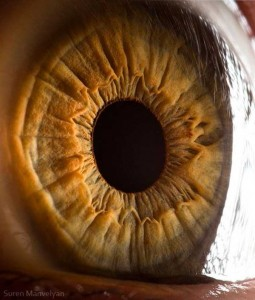 Human Eye Under a Microscope (21 photos) 9