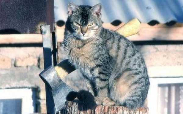 hellish-cats (1)