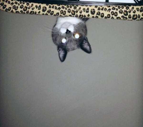 hellish-cats (10)