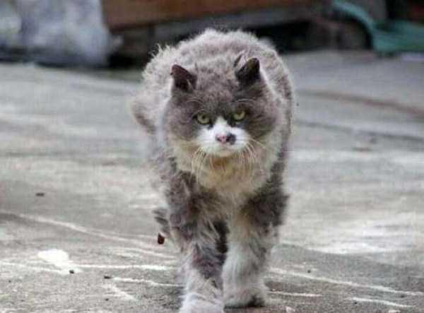 hellish-cats (12)