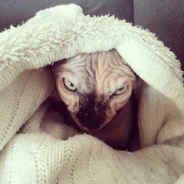 hellish-cats (13)
