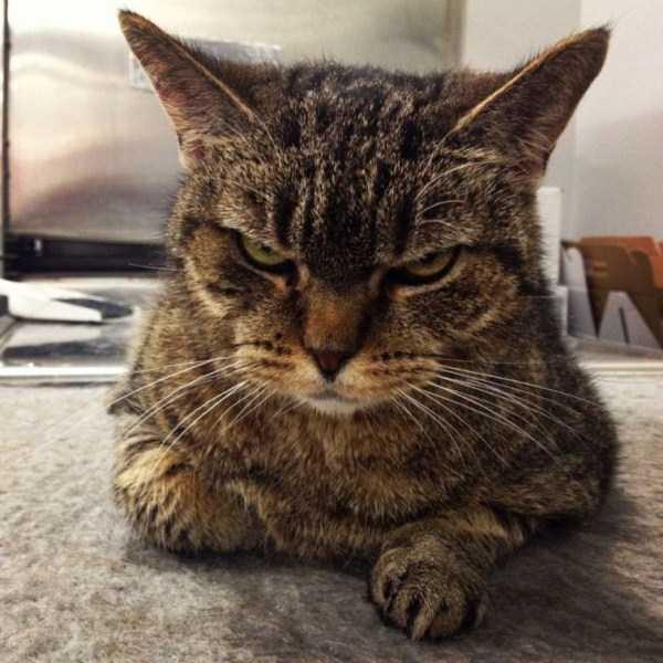 hellish-cats (15)