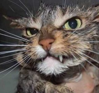 Cats That Are the Embodiment of True Evil (42 photos)