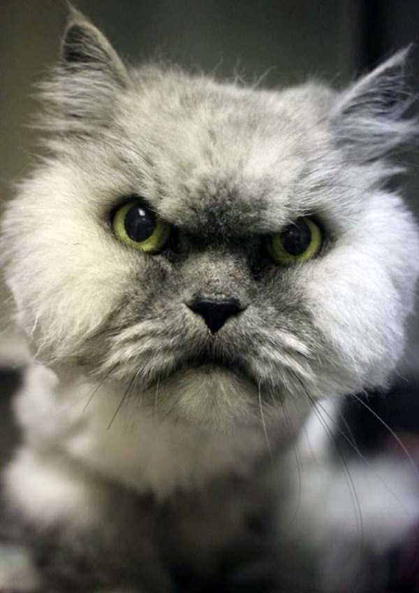 hellish-cats (17)