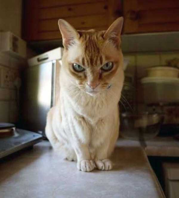 hellish-cats (18)