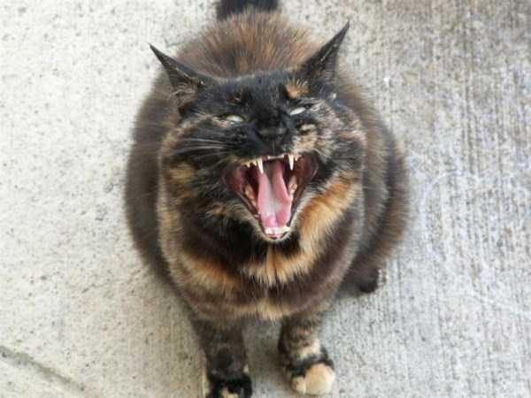 hellish-cats (19)